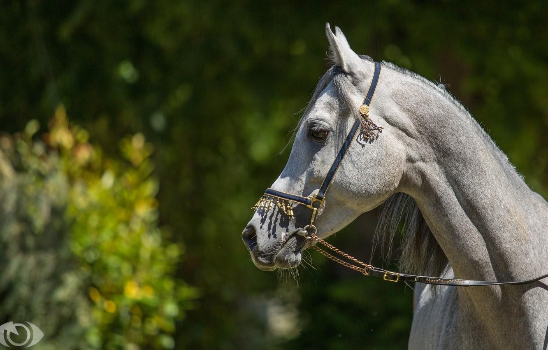 Photo wallpaper face, the sun, light, grey, horse, horse, profile, (с) Oliver Seitz