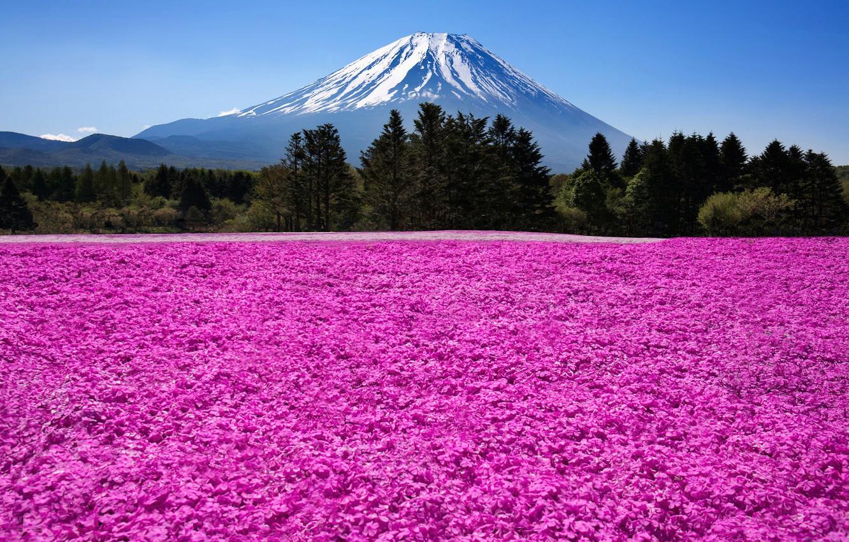 Photo wallpaper nature, mountain, the volcano, Japan, Japan, Fuji