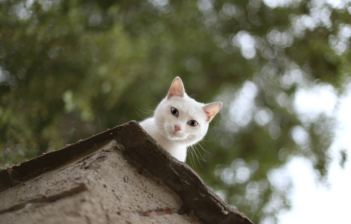 Photo wallpaper roof, cat, eyes, cat