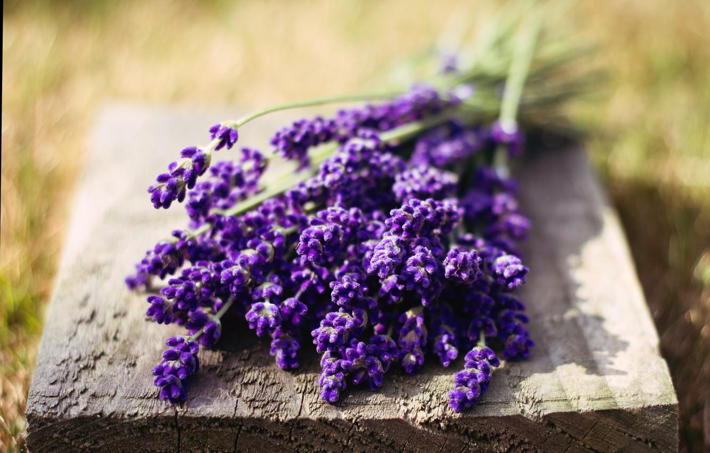 Photo wallpaper greens, purple, macro, flowers, nature, background, widescreen, Wallpaper, rich, blur, wallpaper, flowers, flower, widescreen, background, …