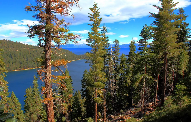 Photo wallpaper forest, water, lake, California, lake Tahoe