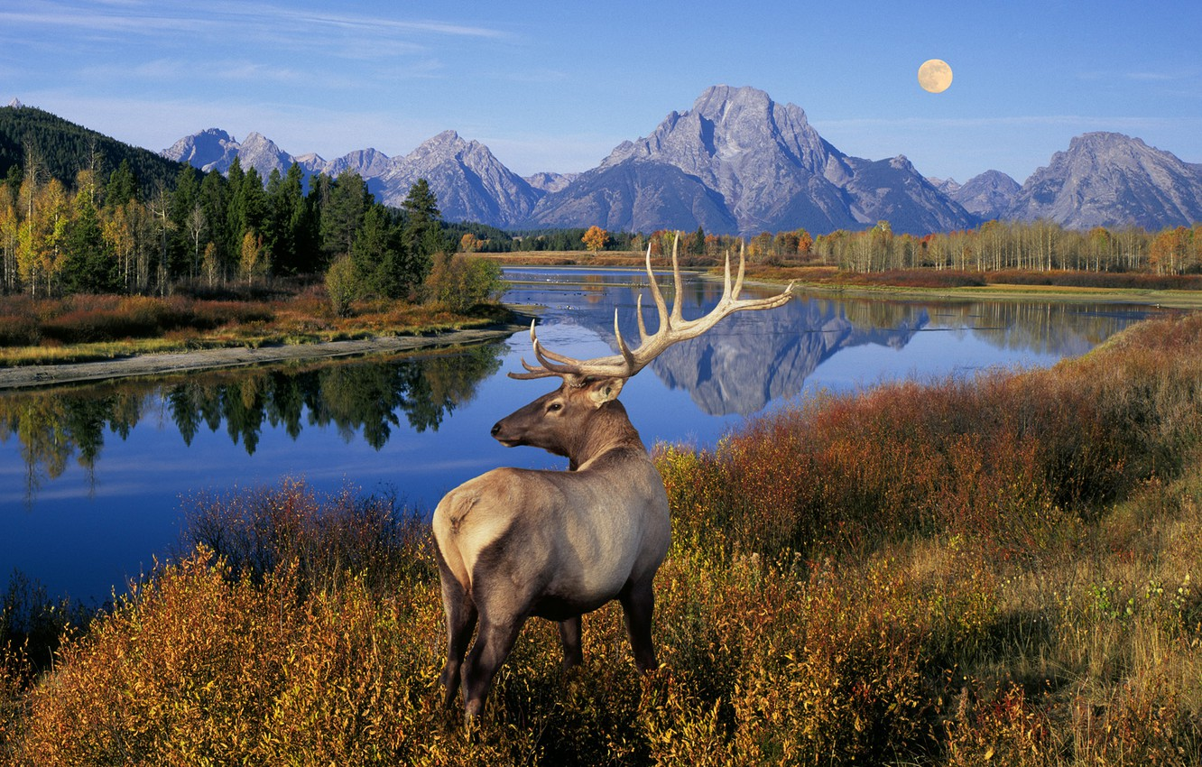 Photo wallpaper grass, trees, landscape, mountains, nature, lake, river, the moon, deer, horns