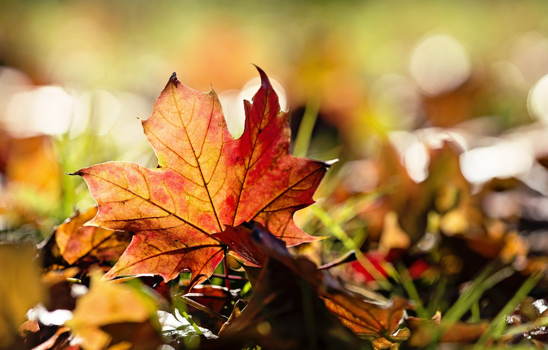Photo wallpaper autumn, grass, leaves, macro
