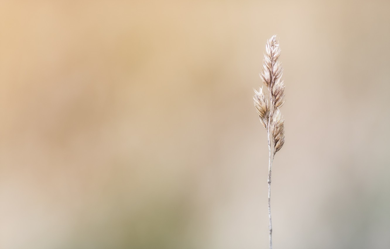 Photo wallpaper grass, background, Standing Tall