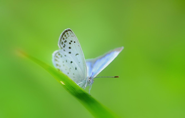 Photo wallpaper greens, butterfly, a blade of grass