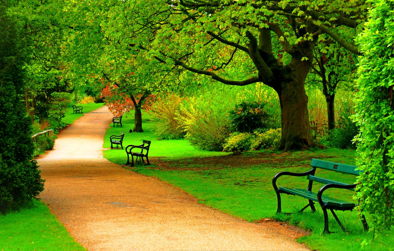 Photo wallpaper road, forest, trees, nature, Park, spring, forest, road, trees, bench, nature, park, spring, walk, bench, …
