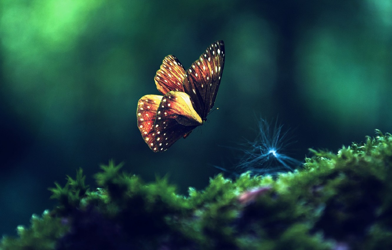 Photo wallpaper greens, macro, insects, butterfly