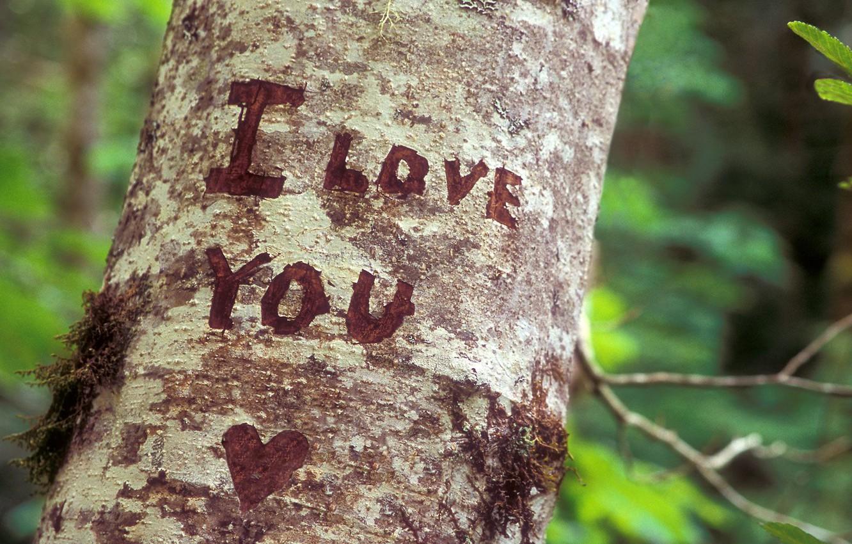 Photo wallpaper tree, feelings, recognition