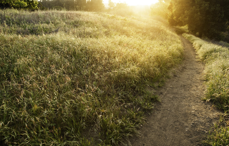 Photo wallpaper road, field, summer, light, nature