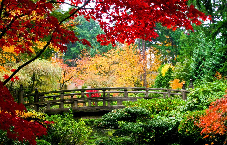 Photo wallpaper autumn, trees, bridge, Park, the bushes