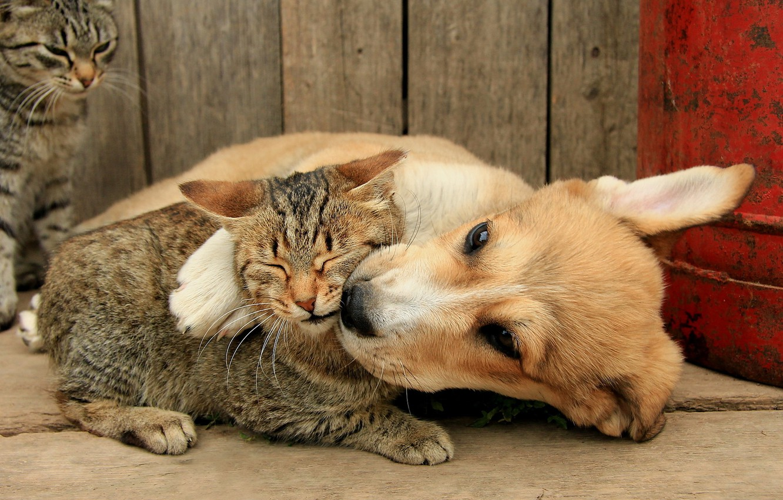 Photo wallpaper cat, dog, friends