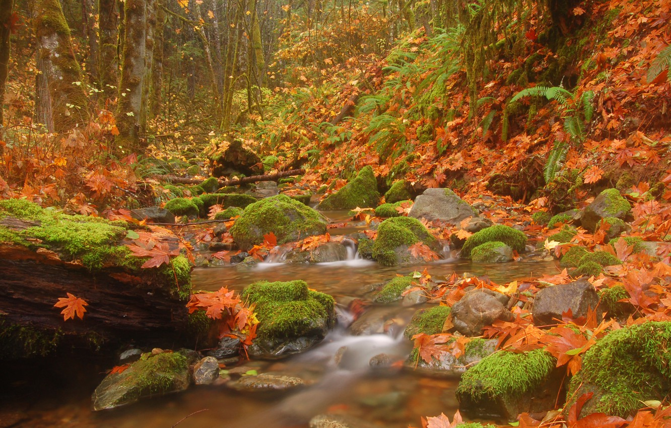 Photo wallpaper autumn, forest, leaves, trees, nature, stream, stones, river, Landscapes