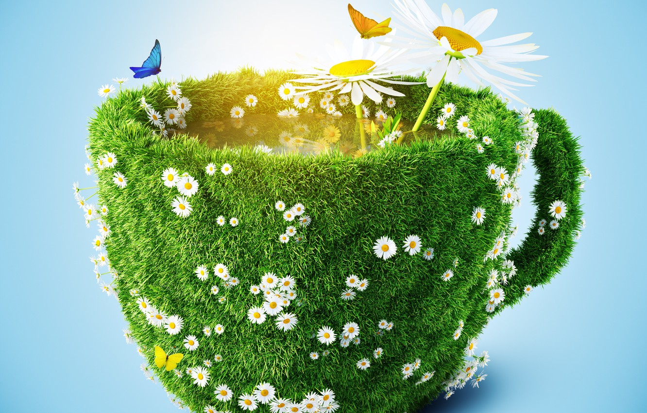 Photo wallpaper grass, light, butterfly, background, chamomile, Cup