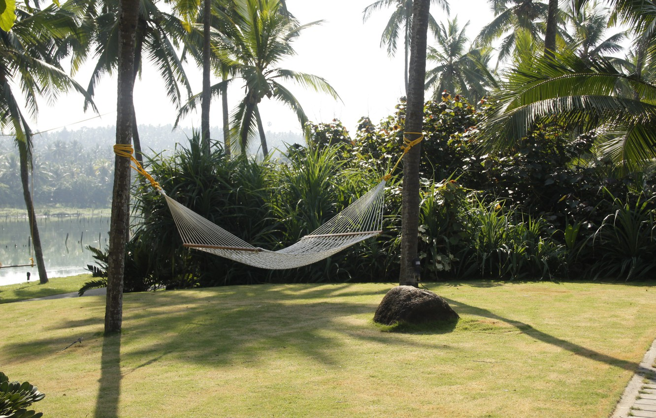 Photo wallpaper nature, Park, background, Wallpaper, India, jungle, hammock, walk, journey