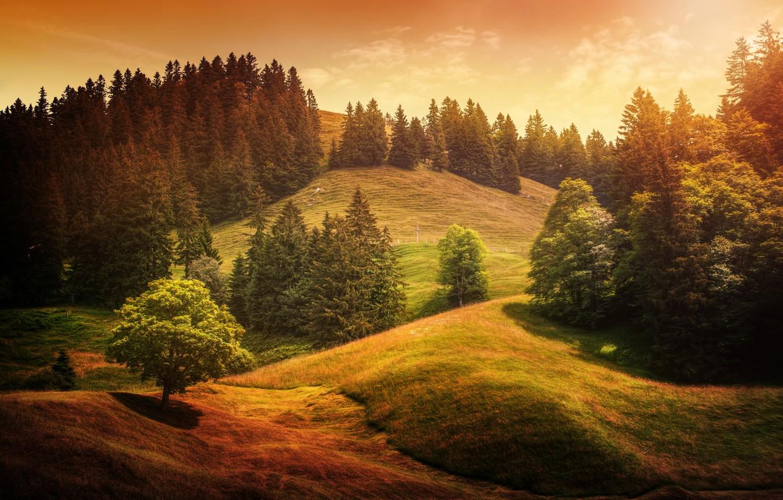 Photo wallpaper trees, hills, treatment, Alpine waves