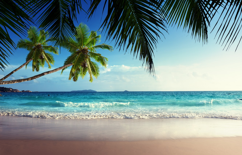Photo wallpaper sand, sea, beach, the sky, the sun, tropics, palm trees, the ocean, shore, summer, sunshine, …