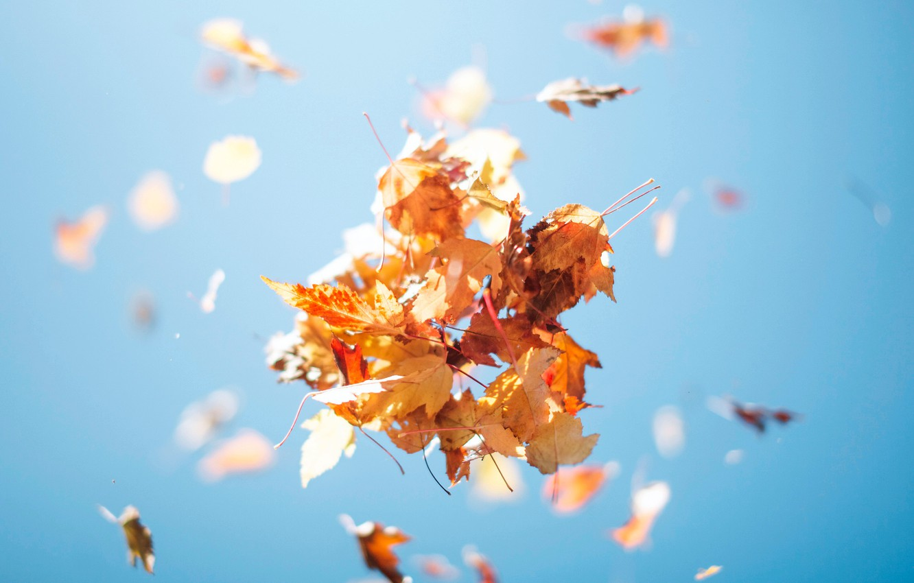 Photo wallpaper autumn, the sky, foliage, up, bunch, leaves