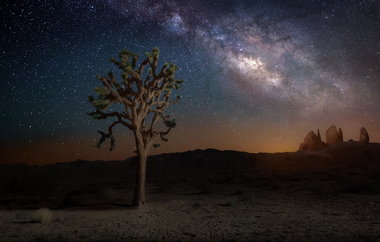 Photo wallpaper the sky, stars, night, nature, tree, the milky way, California