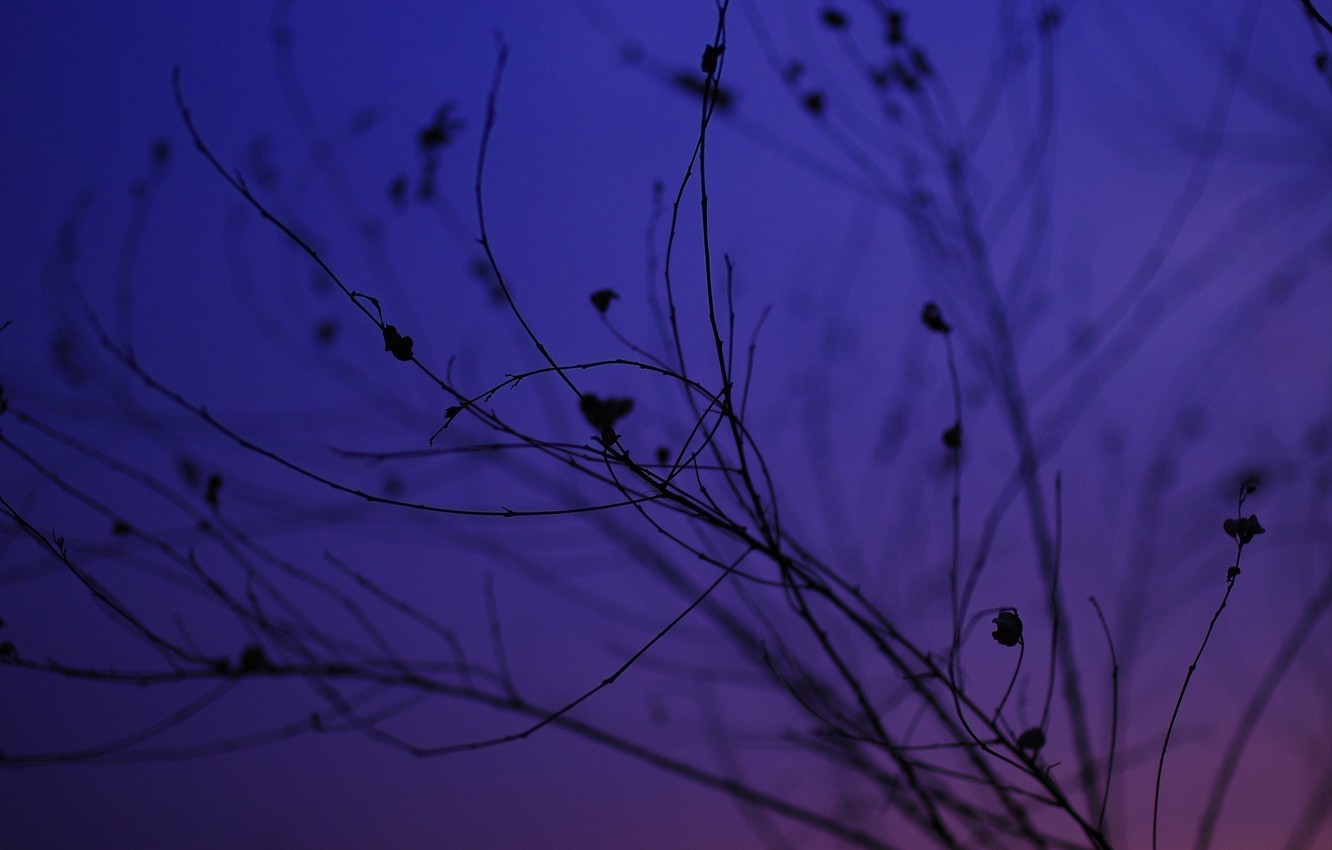 Photo wallpaper the sky, macro, sunset, branches, silhouette, twilight