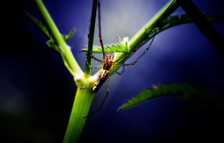 Photo wallpaper sheet, plant, Spider