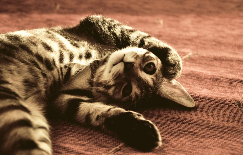 Photo wallpaper Cat, funny, The FLOOR