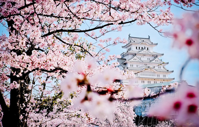 Photo wallpaper castle, spring, Japan, Sakura, pagoda, Palace