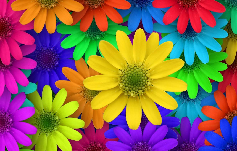 Photo wallpaper macro, flowers, colorful, garden, colorful, flowers, macro, garden