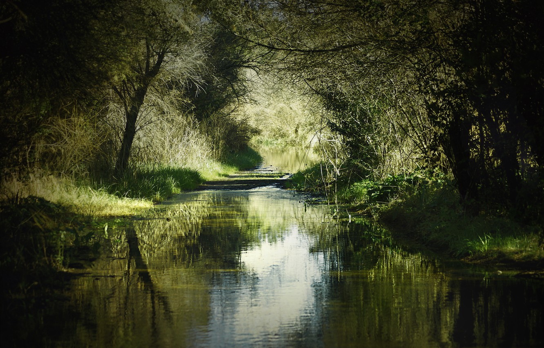 Photo wallpaper summer, grass, trees, nature, river, shadow, Bank