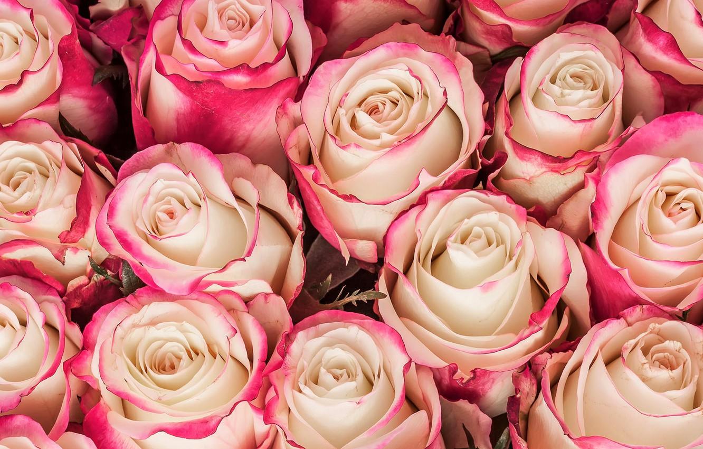 Photo wallpaper flowers, roses, bouquet, pink, flowers, bouquet, roses