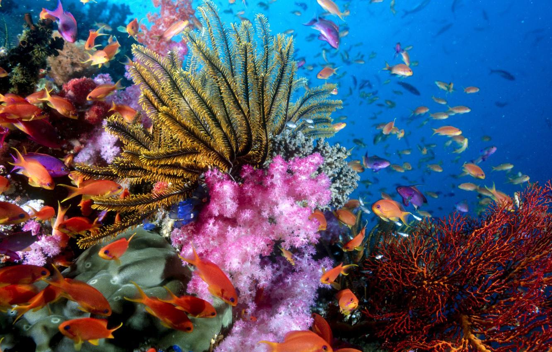 Photo wallpaper fish, corals, reef