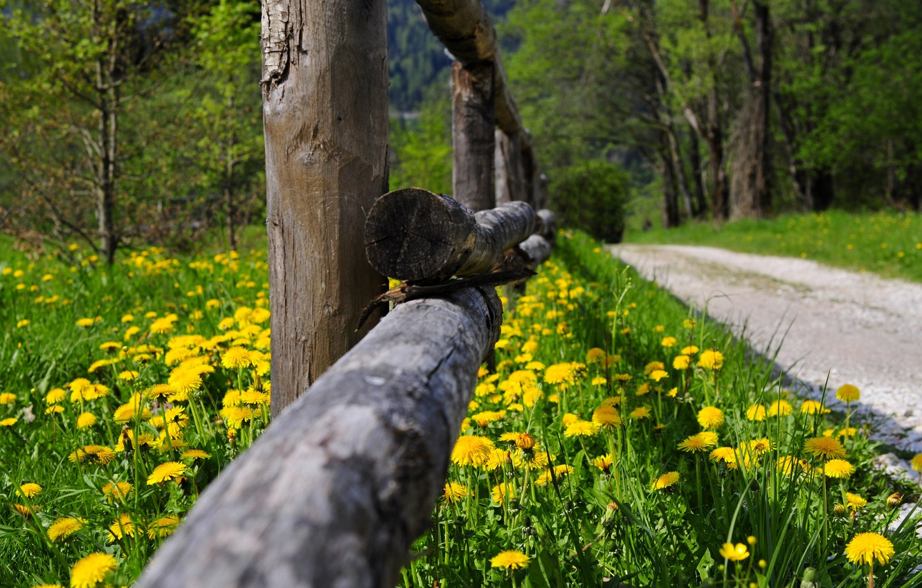 Photo wallpaper road, forest, grass, trees, flowers, nature, Park, spring, grass, forest, road, trees, nature, park, flowers, …