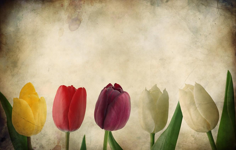 Photo wallpaper flowers, paper, Tulip, tulips, texture, Grunge
