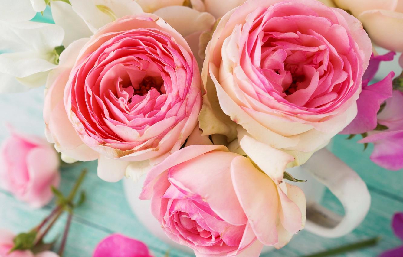 Photo wallpaper photo, Flowers, Three, Pink, Roses, Closeup
