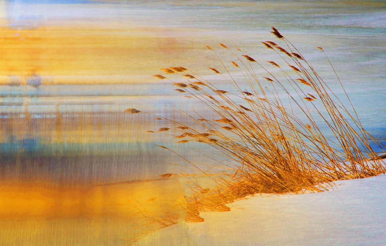 Photo wallpaper sand, grass, nature, shore, touch