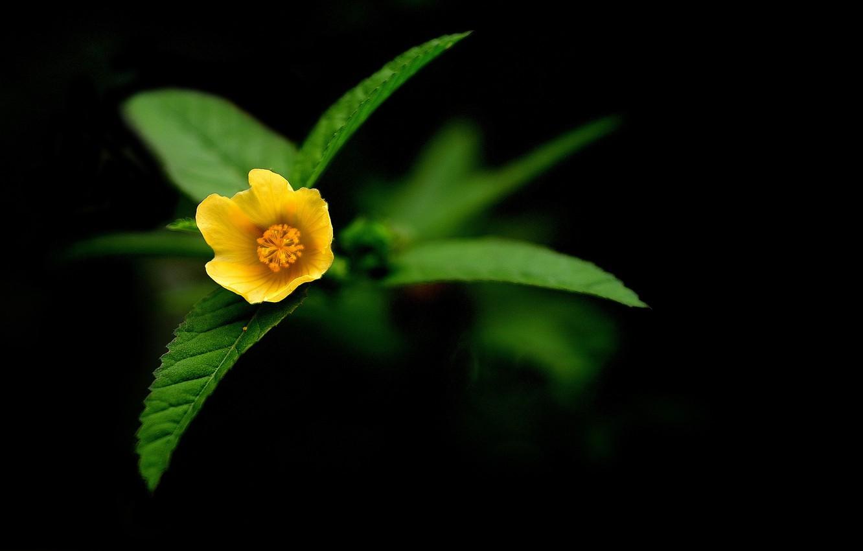 Photo wallpaper flowers, nature, yellow
