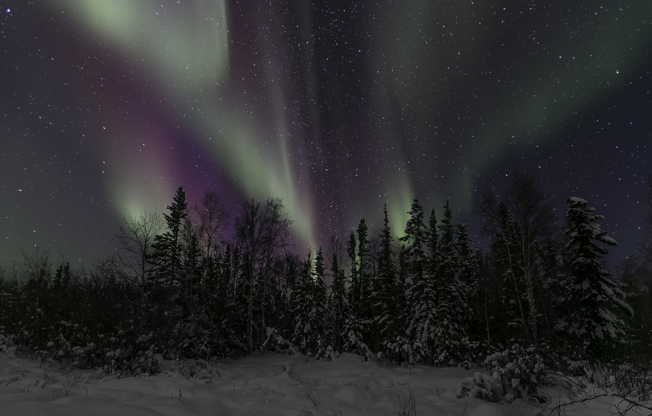 Photo wallpaper winter, the sky, stars, trees, night, Northern lights, Northern Canada