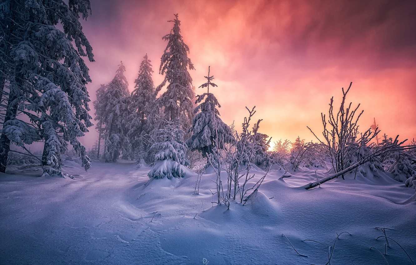 Photo wallpaper winter, forest, snow, morning, South-West Germany, the black forest, Baden-württemberg