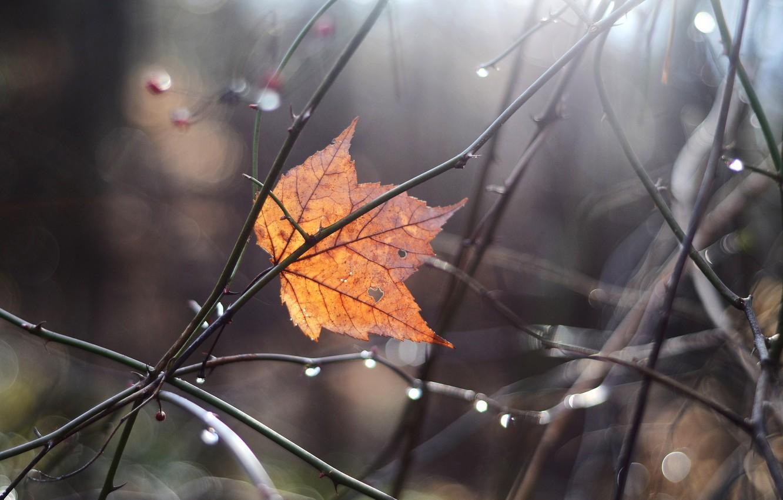 Photo wallpaper autumn, macro, branches, sheet, glare