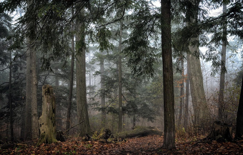 Photo wallpaper autumn, forest, nature