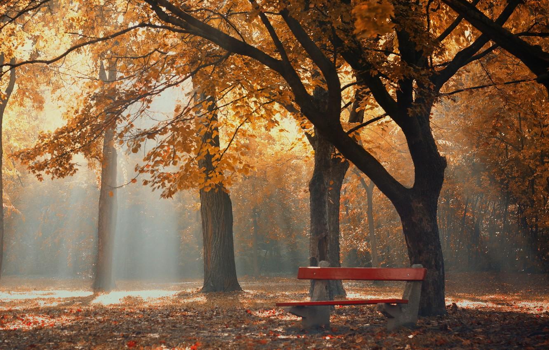 Photo wallpaper autumn, fog, Park, morning