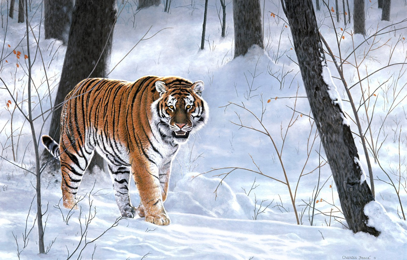 Photo wallpaper winter, forest, animals, tiger, painting, taiga, Charles Frace, Emperor Of Siberia