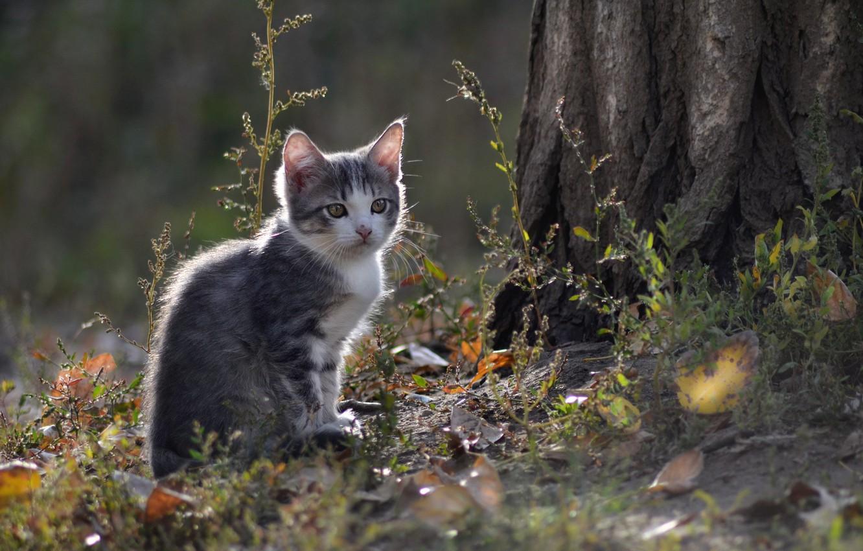 Photo wallpaper cat, look, nature