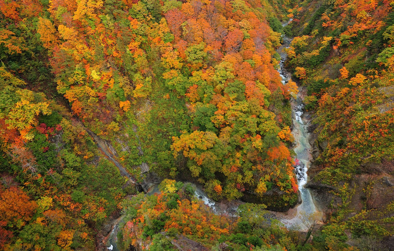 Photo wallpaper forest, river, top, gorge
