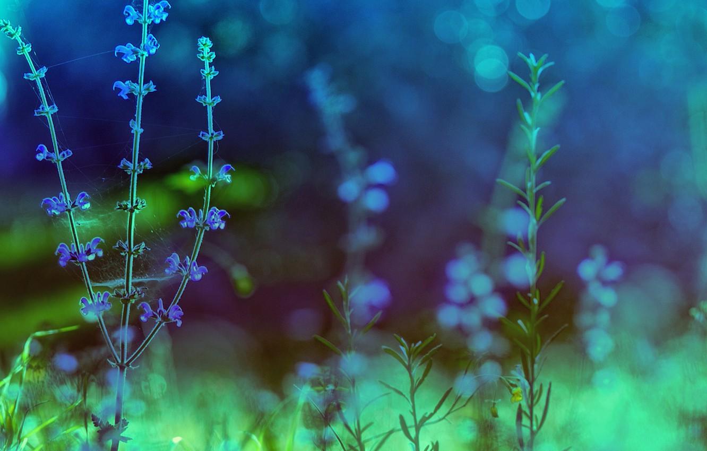 Photo wallpaper color, macro, flowers, nature, treatment, plants, green, blue