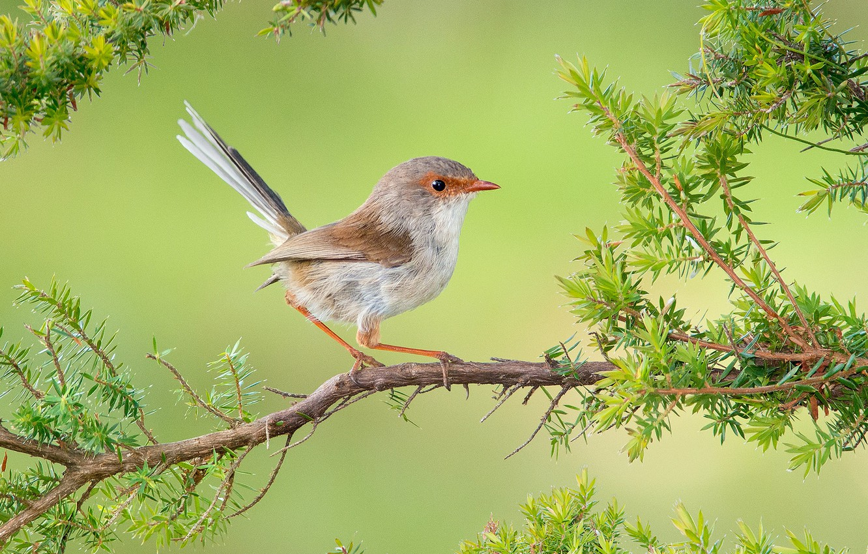 Photo wallpaper branch, bird, baby, malur