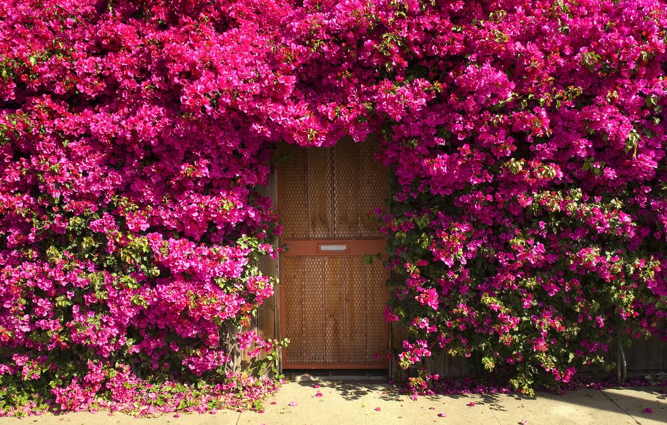 Photo wallpaper flowers, thickets, Bush, door, entrance