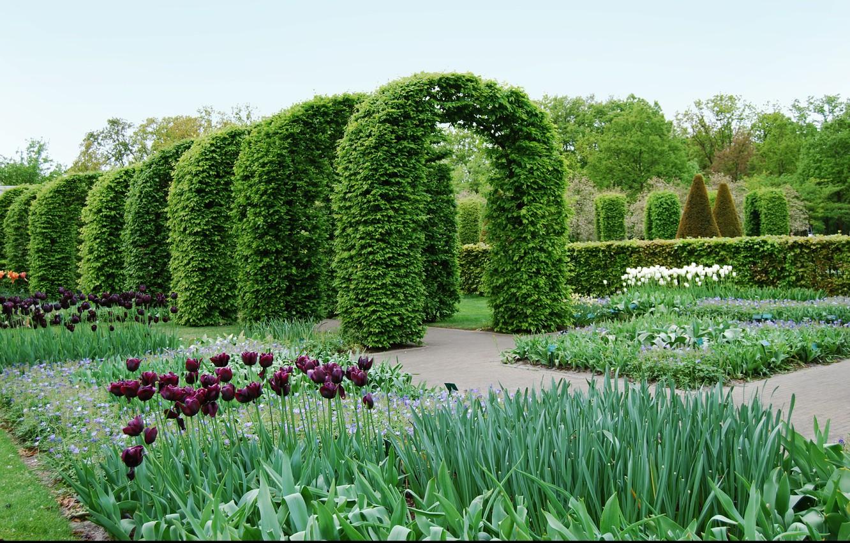 Photo wallpaper plants, spring, garden, tulips, arch, Nature, park, garden, tulips, spring