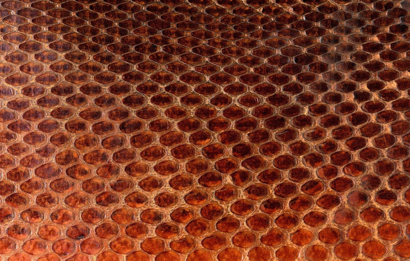 Photo wallpaper texture, leather, animal texture, background desktop, the scales of a snake