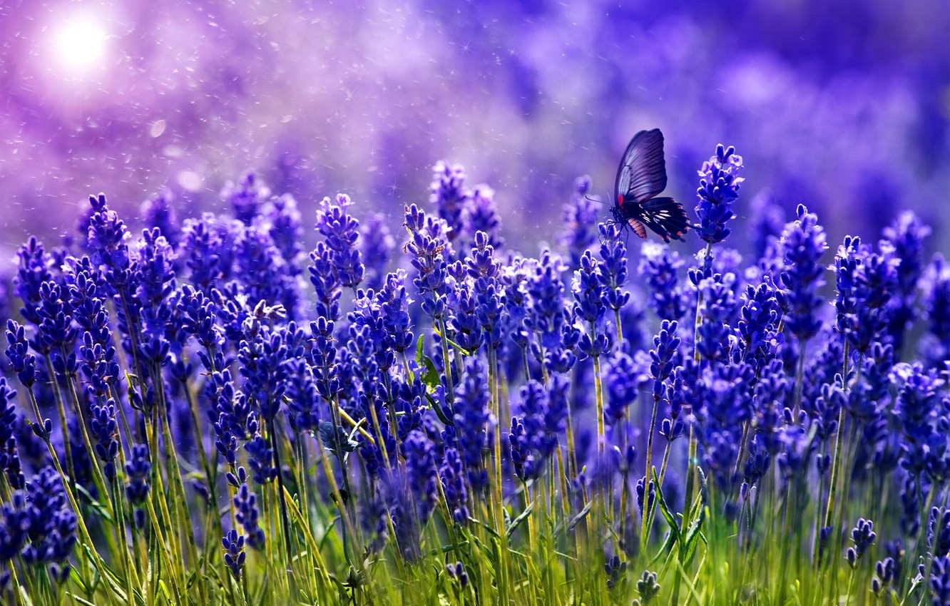 Photo wallpaper greens, butterfly, color, lavender