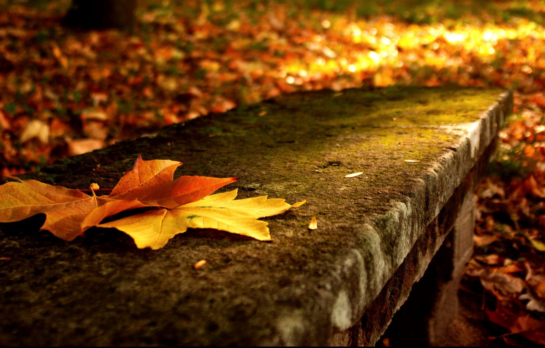 Photo wallpaper autumn, leaves, macro, trees, nature